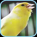 Masteran Kicau Burung Kenari icon