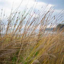 The Soul Is Alive ...  by Roopam Choudhury - Nature Up Close Leaves & Grasses ( leaves, auckland, grass, beach, landscape, new zealand )