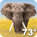Wildlife Weather Icon