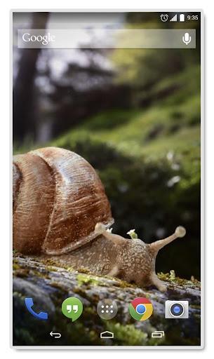 Snail 3d Real Live Wallpaper