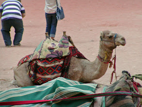 Photo: Not many persons tried the camels; we didn't inquire about the price--perhaps they were too expensive.