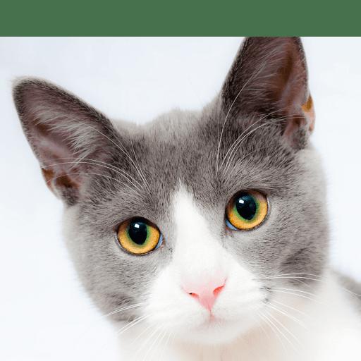 Formation en communication animale