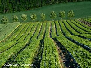 Photo: Salad field in Hyggen