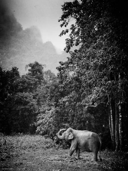 Photo: Khao Sok