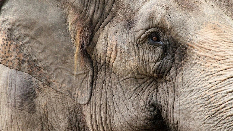 Watch Zoo Diaries live