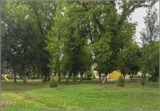Photo: Ienupăr (Juniperus communis), recent plantati in Turda,  Calea Victoriei, parcul din Micro 1 - 2019.07.15