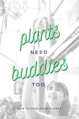 Plants Need Buddies - Pinterest Pin item