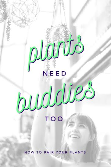 Plants Need Buddies - Pinterest Pin Template