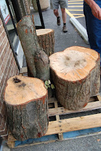 Photo: A stash of ambrosia maple up for grabs outside.