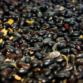 Coffee Beans by Karen Coston - Food & Drink Alcohol & Drinks ( up close, coffee beans, beans, coffee, guatemala,  )
