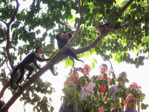 Photo: Monkeys posing for tourists