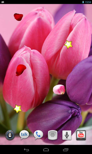 Tulips Pink live wallpaper