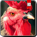 Rooster Wallpaper icon