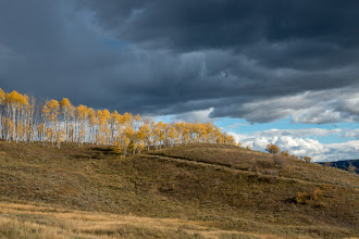 Photo: Aspens and cloudy skies
