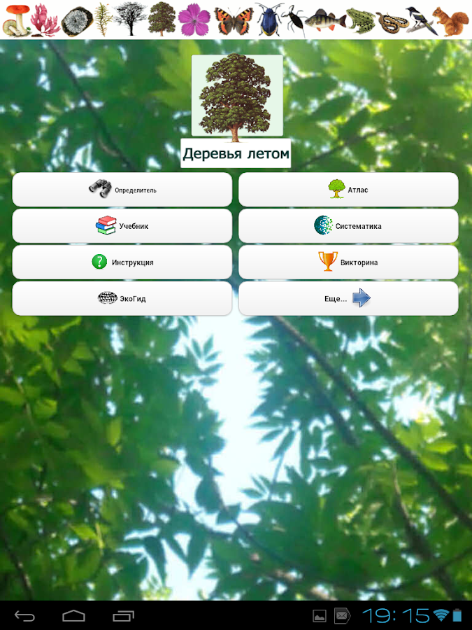EcoGuide: Trees in Summer- screenshot