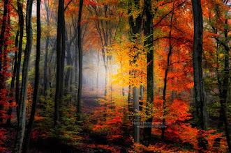 Photo: Light Colors