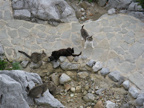 Photo: Feral Cats