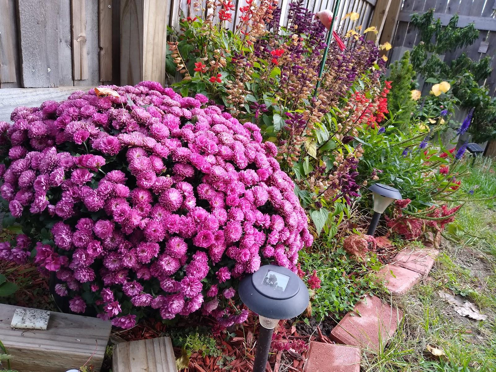 pollinator garden picture