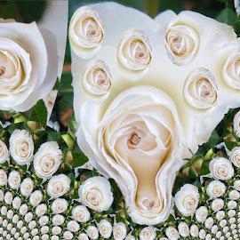 white roses  by Paul Wante - Digital Art Things ( flowers, whitr, abstract, roses, digital art )