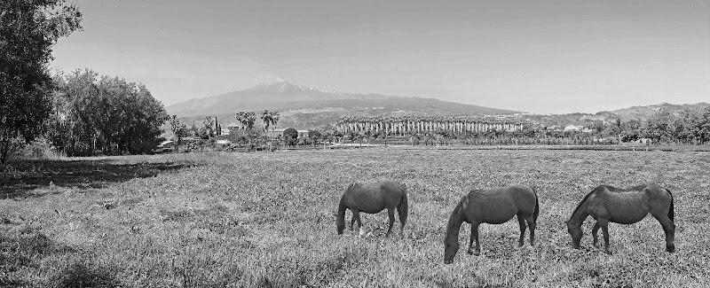 tre cavalle alle pendici dell'Etna di lugiube