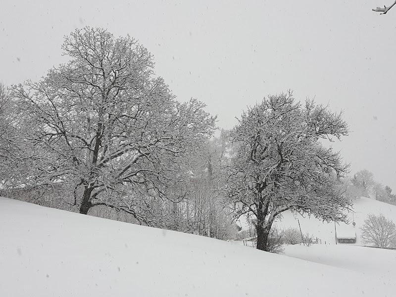 Solo neve e natura di joysphoto