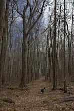 Photo: Early spring walk with Keswick (I was dogsitting).