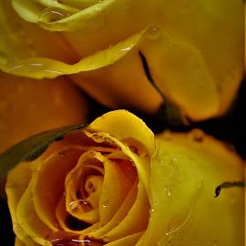 by Michelle Brush - Flowers Flower Arangements