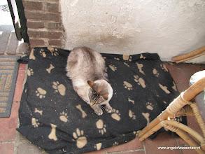 Photo: Zo, ik heb het bed van die zwarte ingepikt