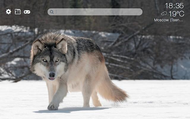 Wolves HD new free tab theme