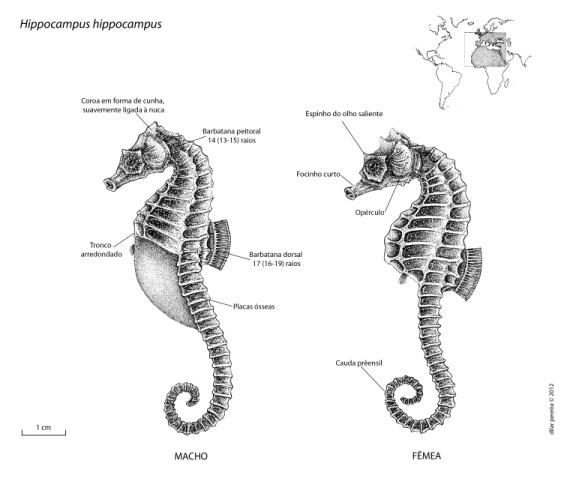 SeahorsesPranchaHh_Poster.jpg