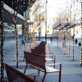 Bench Row by Scott Hemenway - City,  Street & Park  Street Scenes ( lights, bench, trees, vancouver, row )