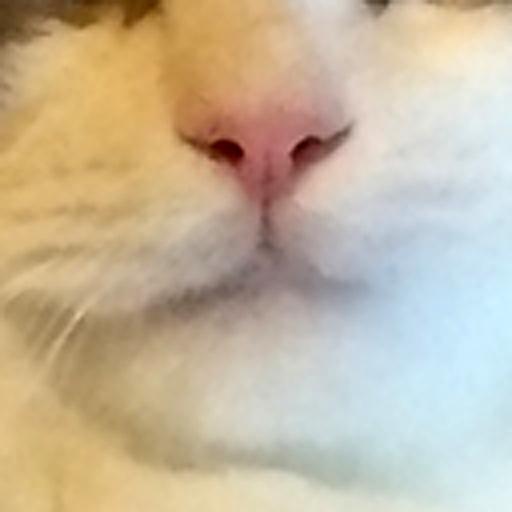 cat muzzle avatar image