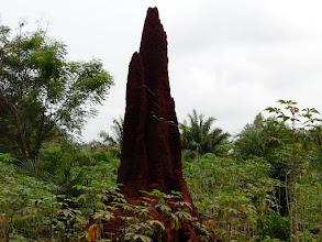 Photo: une termitière