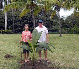 Photo: Mr. and Mrs. Timmis from Georgia celebrated their honeymoon with a palm planting