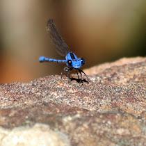 Arthropoda de Cuenca Santa Inés, Zamorano, Honduras