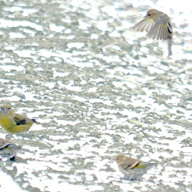 Birds by Jaliya Rasaputra - Animals Amphibians