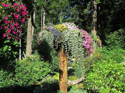 Juneau-Glacier-Gardens - Glacier Gardens Rainforest Adventures, a botanical garden in Juneau, Alaska.