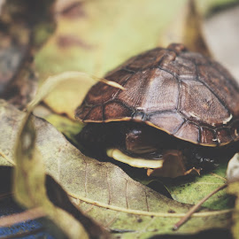 Crash the turtle by TJ Morrison - Animals Reptiles ( macro, turtle, nature, up close, abstract )