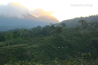 Photo: NF Photo 110131, Arenal in Costa Rica http://nfbild2.blogspot.com/2011/02/mwt-arenal-volcano.html