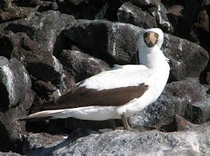 Photo: Toinen (kolmesta) suulalajista saarilla