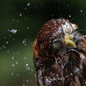 by Emmy Dijkmans - Animals Birds