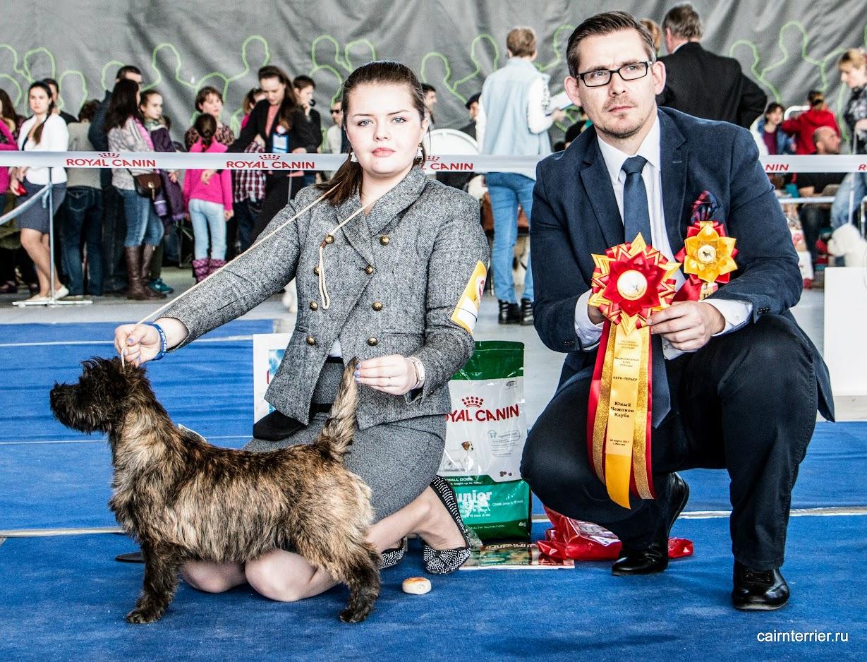 Фото керн терьера Акселя питомника Еливс с хендлером и экспертом на призовом месте выставки