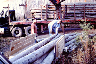 Photo: Hauling the shorter ones up on the trailer