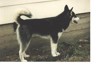 Photo: Lumirinteen Denali 1995