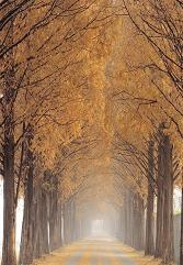 Nami Island Autumn Season - South Korea Tour