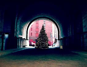 Photo: Christmas Tree under Brooklyn Bridge