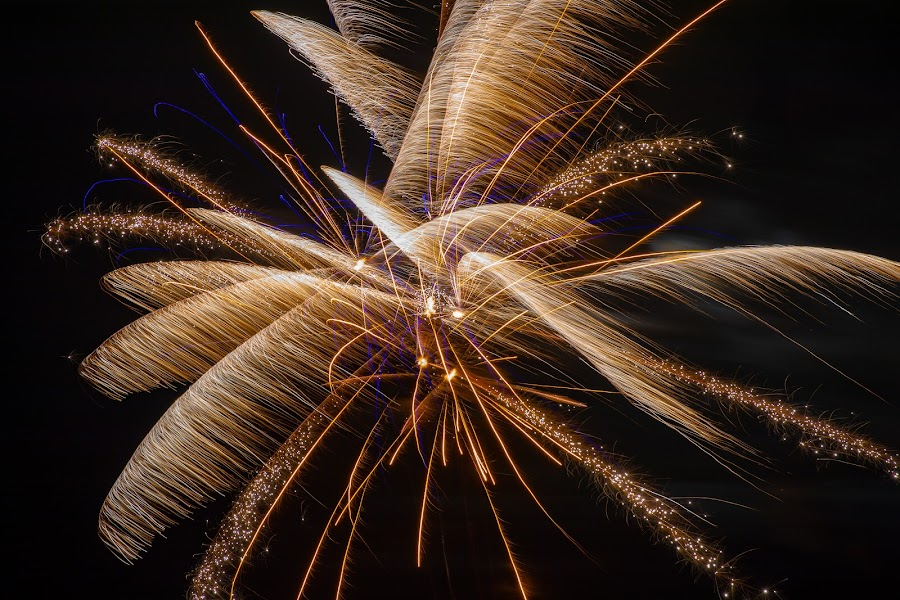Myrtle Beach Palm by Mike Craig - Public Holidays July 4th