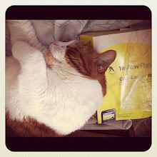 Photo: He can tell you any number from Yellow Pages! #cat #catstagram #catoftheday #pet #animal #sleep #yellow #bed #intercer - via Instagram, http://instagr.am/p/MjV3JjJfo7/