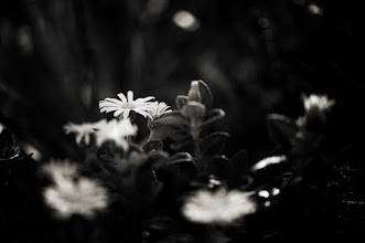 Photo: goodnight friends, its been an interesting day, hope you all are well :) #flowerphotography  #monochrome  #blackandwhitephotography