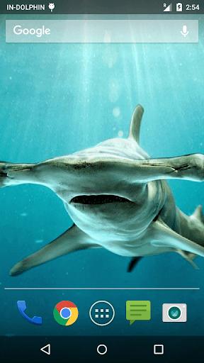 Finger Touch Shark Wallpaper
